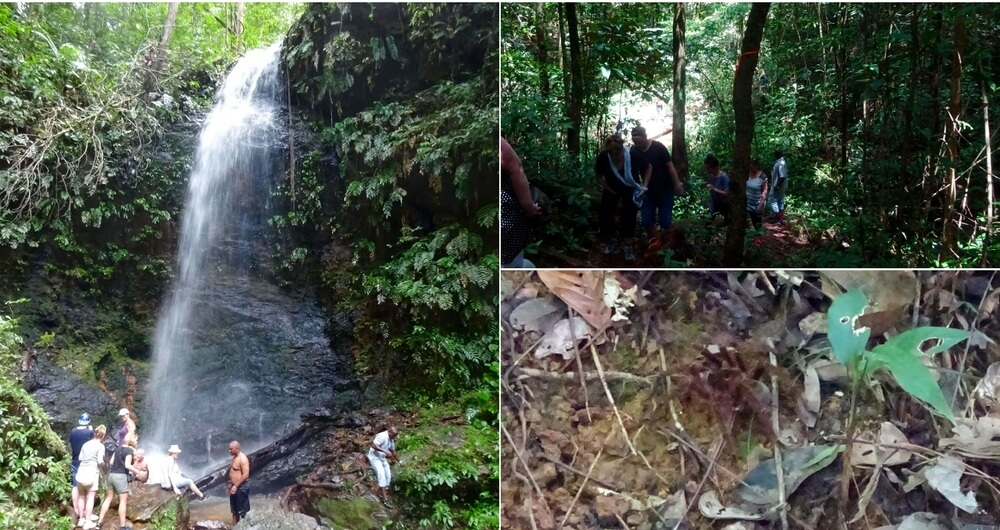 Suriname Blog Brownsberg wandeling