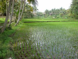 3 Bali huwelijksreizen