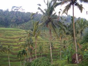 7 Bali huwelijksreizen