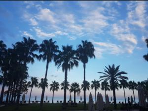 Club Med Kemer Palmiye palmbomen